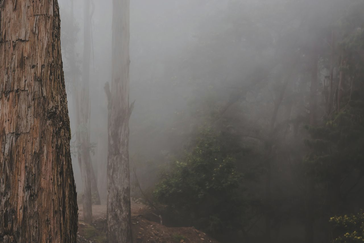 Thick fog in the woods 😍😍 Nature Tree Fog Landscape Beauty In Nature Outdoors Environment Growth No People Lush - Description Day Agriculture Beautiful Taking Photos Travel Photography Tamilnadu Tadaa Community Kodaikanal Big Trees Low Saturation Exploring Climate Change Hillstation Full Length Visibility