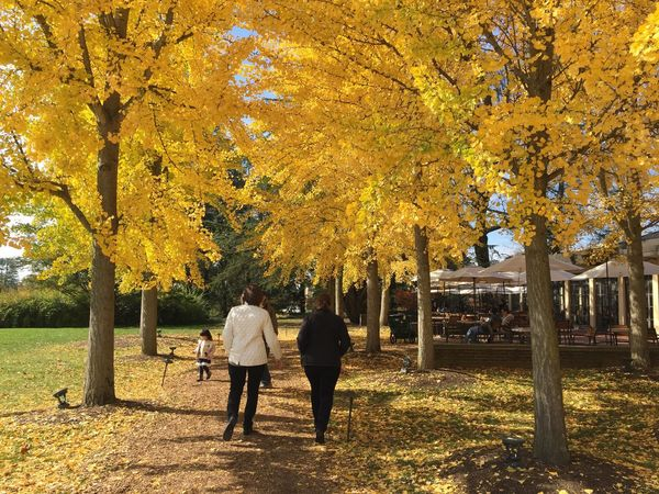 Walking Yellow Leaves Path Trees LongwoodGardens Tree Autumn Two People Rear View Couple - Relationship Real People Men Leisure Activity Full Length Women Outdoors Leaf Nature Change Lifestyles Togetherness Beauty In Nature Warm Clothing Scenics