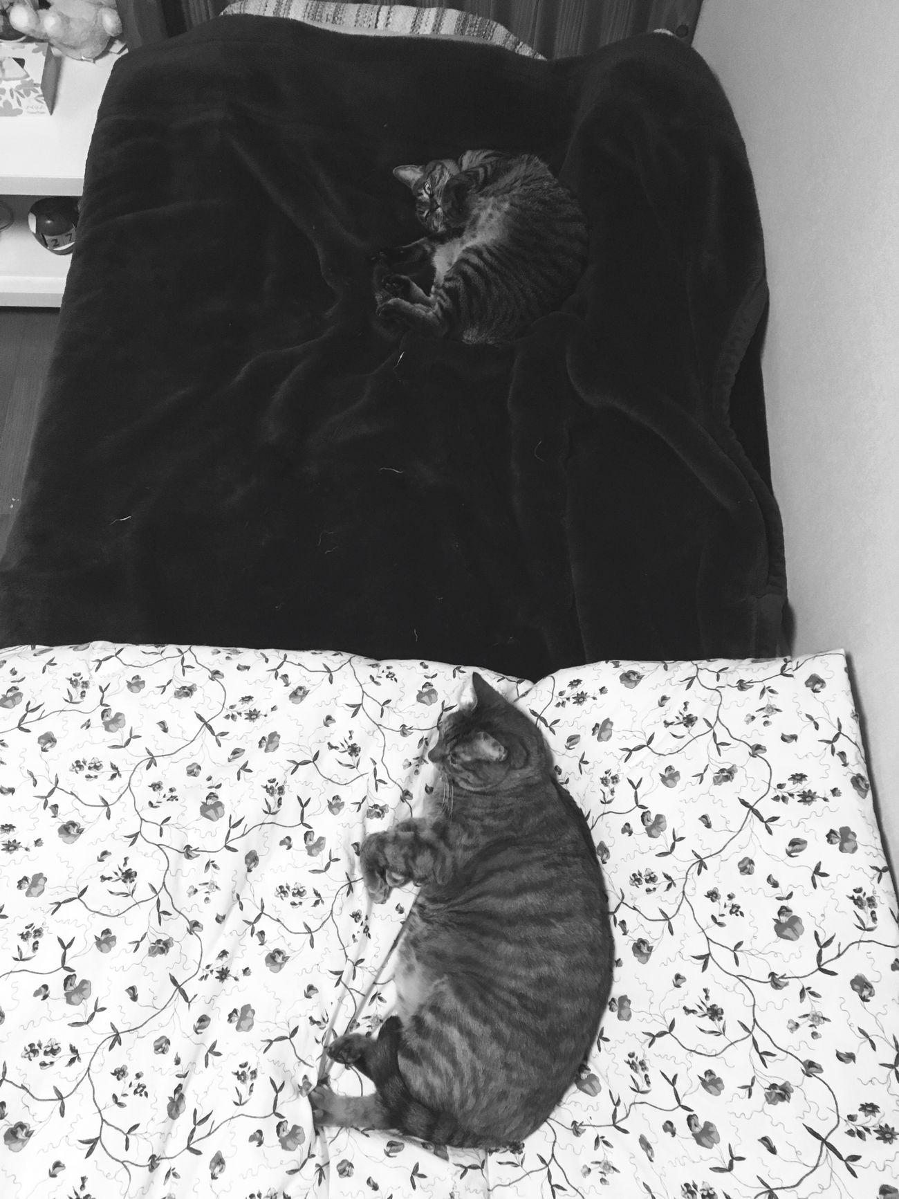 I Love My Cat My Cats Cat Cat♡ Animal Animals Blackandwhite Black & White Blackandwhite Photography Black And White Photography Black And White