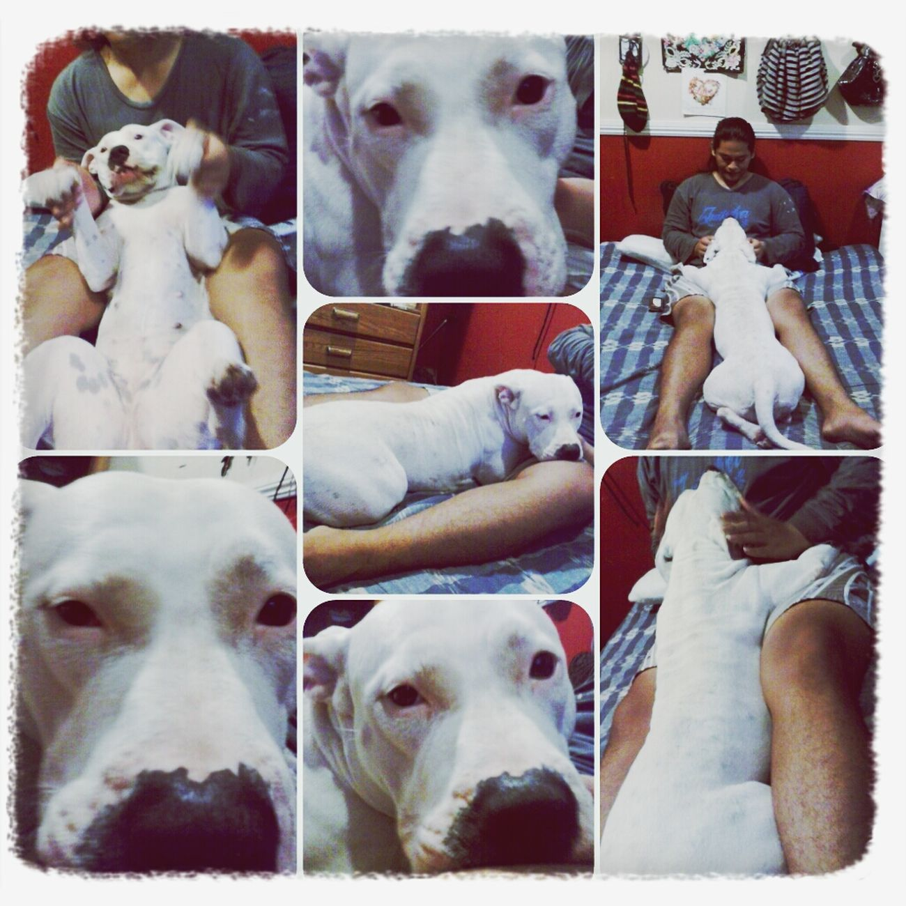 Lifes greatest blessings...my son &/is my bodyguard Ki'ai & Kulia~ Mans Best Friend Pitbull my best friends... Ohana <3 Dogs