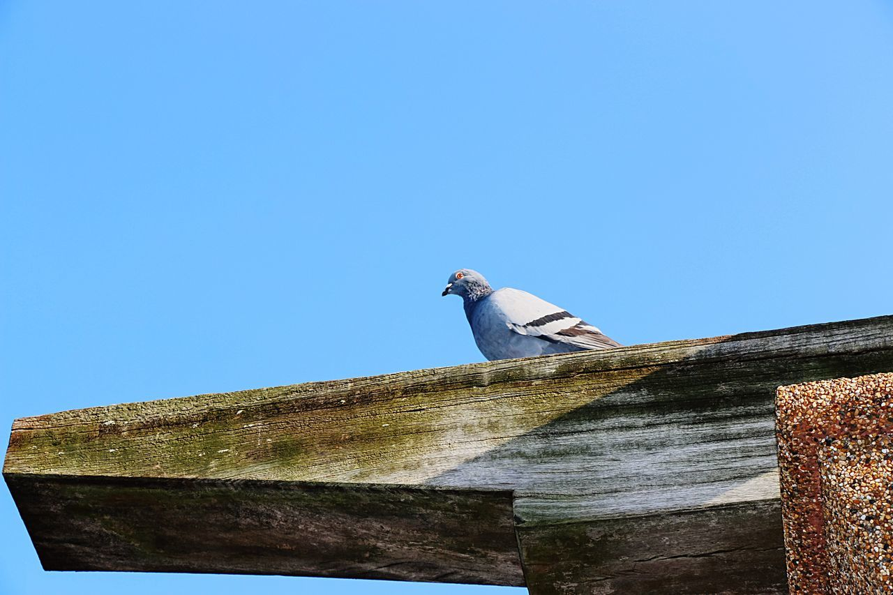 Pigeon Pigeon Bird  Pigeon Pose Pigeon Point  Pigeon Forge Watching Pigeons Everywhere Pigeon Love PigeonSoCute Pigeon Love Nature EyeEm Best Edits EyeEm Nature Lover From My Point Of View