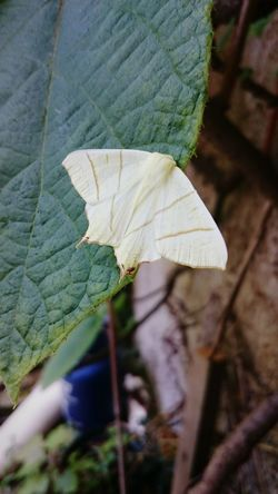 Garden Moth Insect