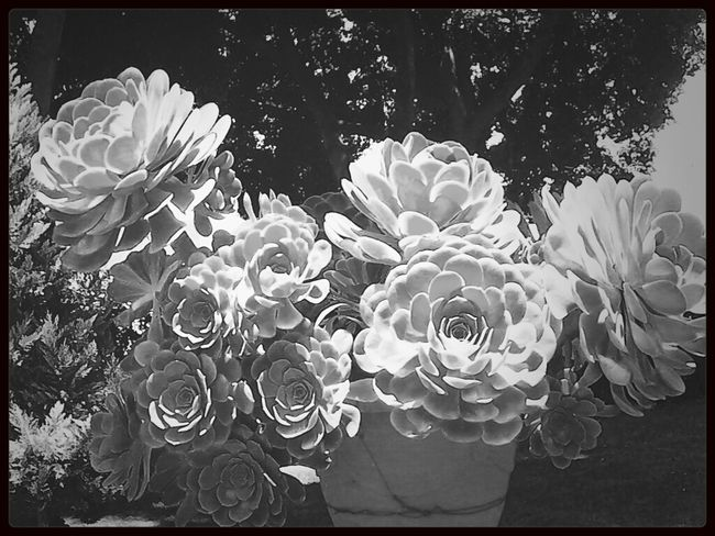 Cool Plant Black & White Interesting Nature Photography