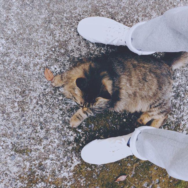 Cat Relaxing Foot Relaxing Snapshots Of Life Pet Shoes
