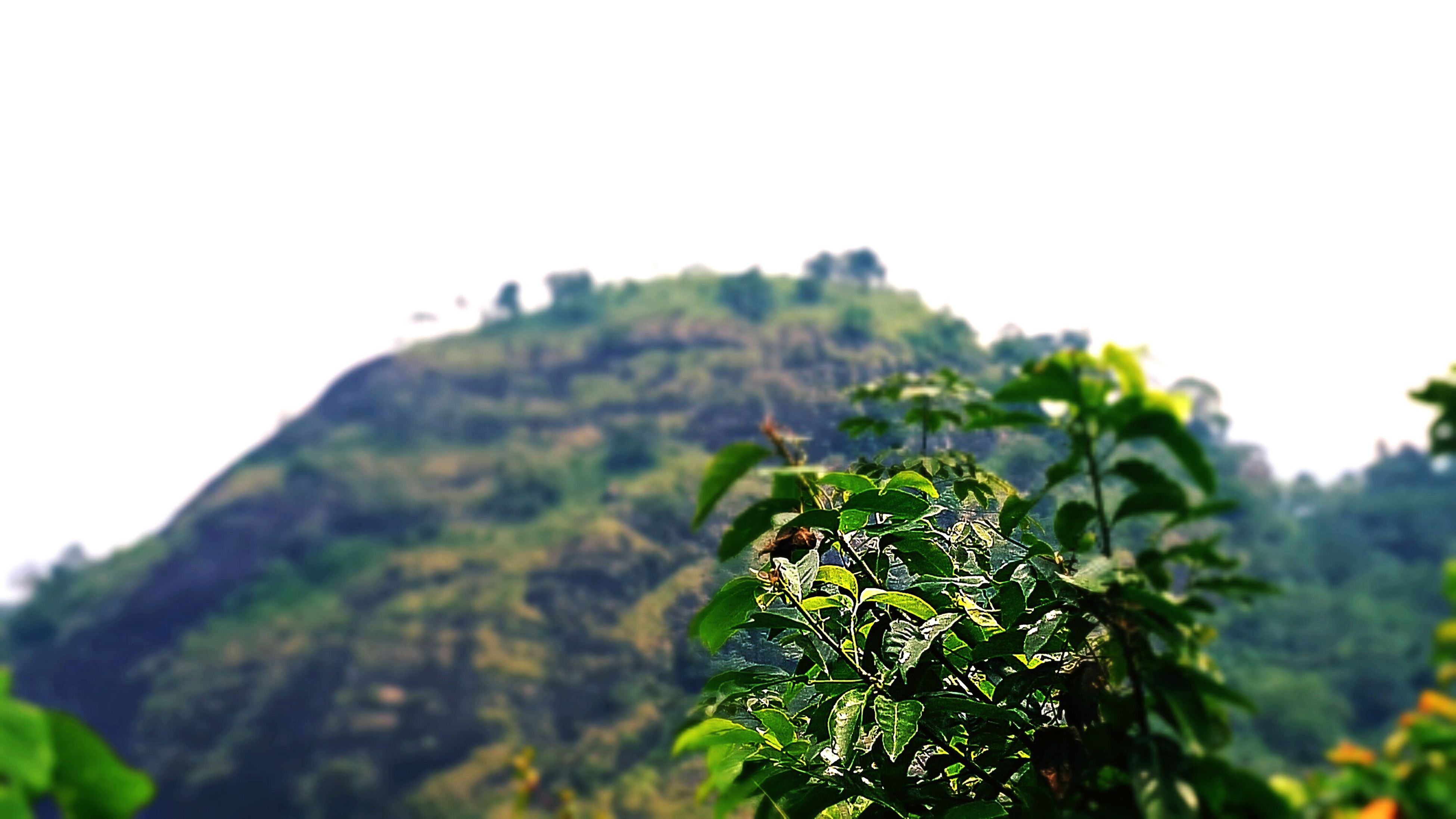 clear sky, growth, tree, leaf, low angle view, nature, plant, green color, beauty in nature, focus on foreground, copy space, close-up, mountain, tranquility, day, growing, outdoors, selective focus, freshness, sky