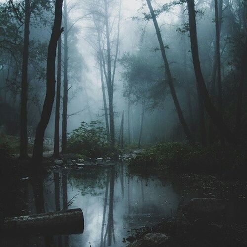 Nature Landscape Darkness Foggy Woods Trree Night Fall Majestic Nature Sky And Clouds Photography