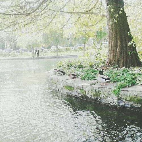 Nature Lake Greenlife Wonder