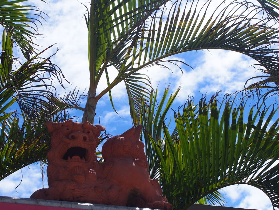 Tree Palm Tree Sky Headshot Plant Day Outdoors Nature Close-up Smiling Sea Life 写真撮ってる人と繋がりたい ファインダー越しの私の世界 写真好きな人と繋がりたい Photographer Japan Beauty In Nature 沖縄 シーサー Okinawa