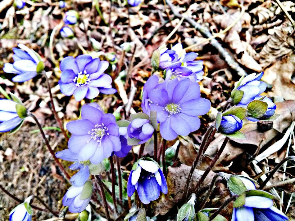 Spring Flowers Summer Coming Flowers