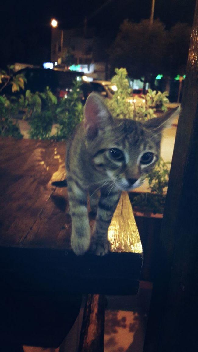 Cute Pets Lost Cat Kattycat