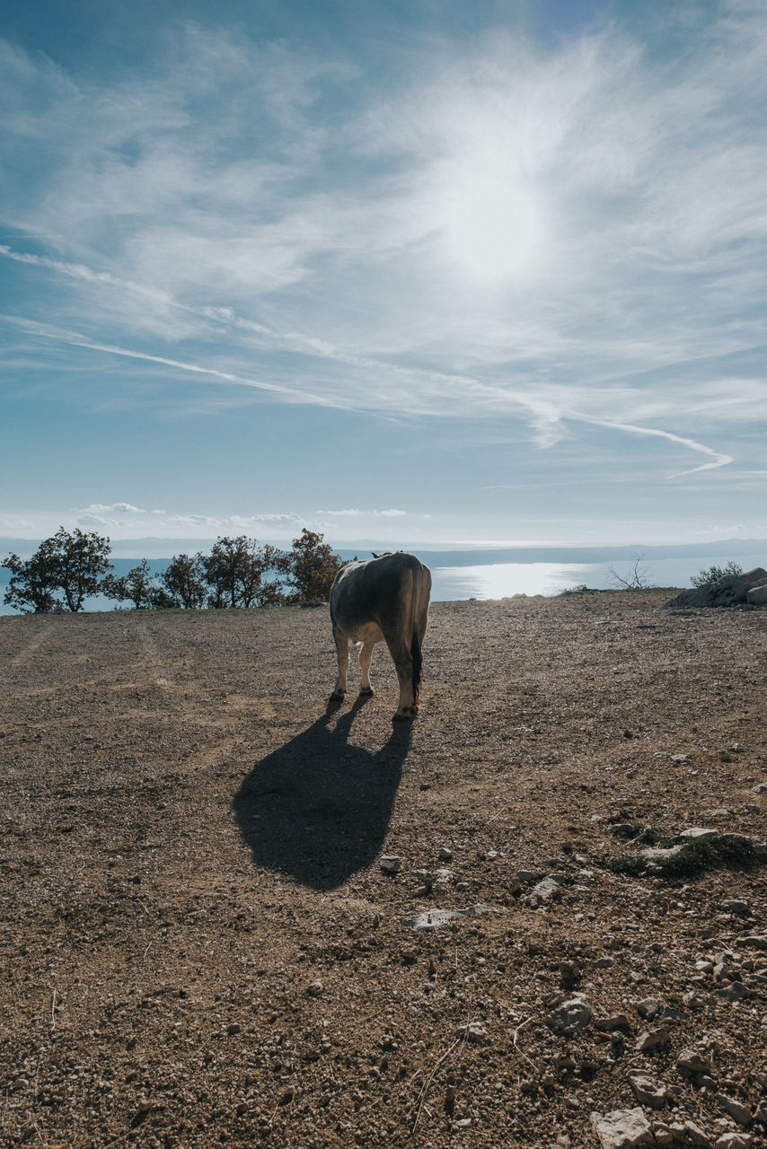 Animal On Field Against Sky