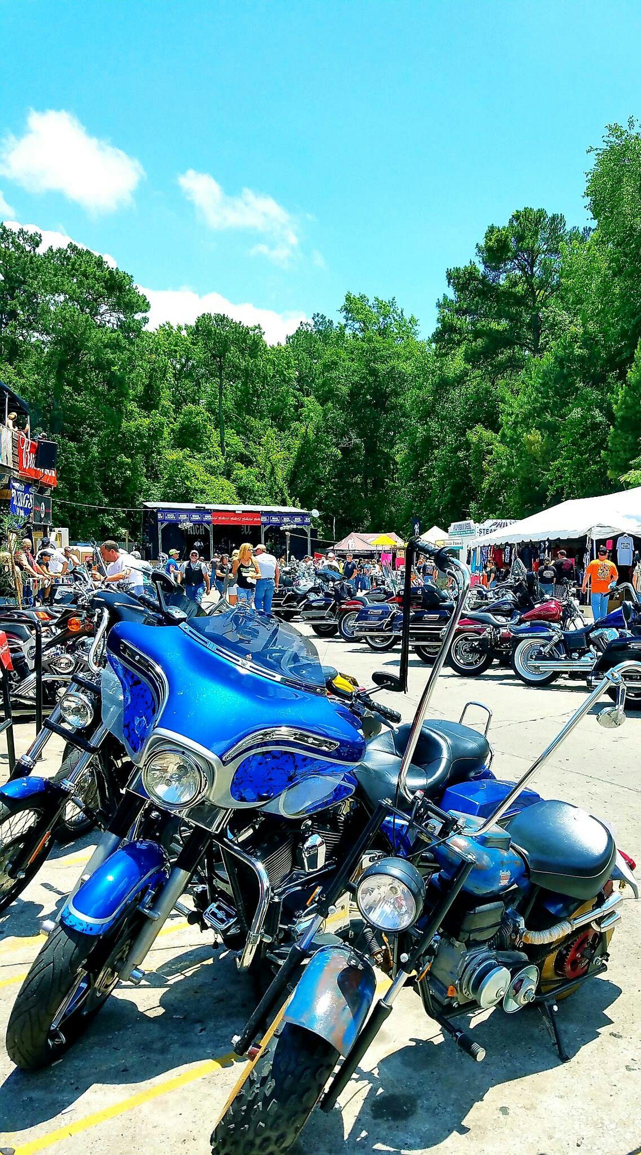 Tree Blue Celebration Outdoors Multi Colored Day Bikeweek2016 Bikeweek Harleydavidsongirl Harleygirl Harley4life Myrtlebeachsouthcarolins Transportation Mode Of Transport