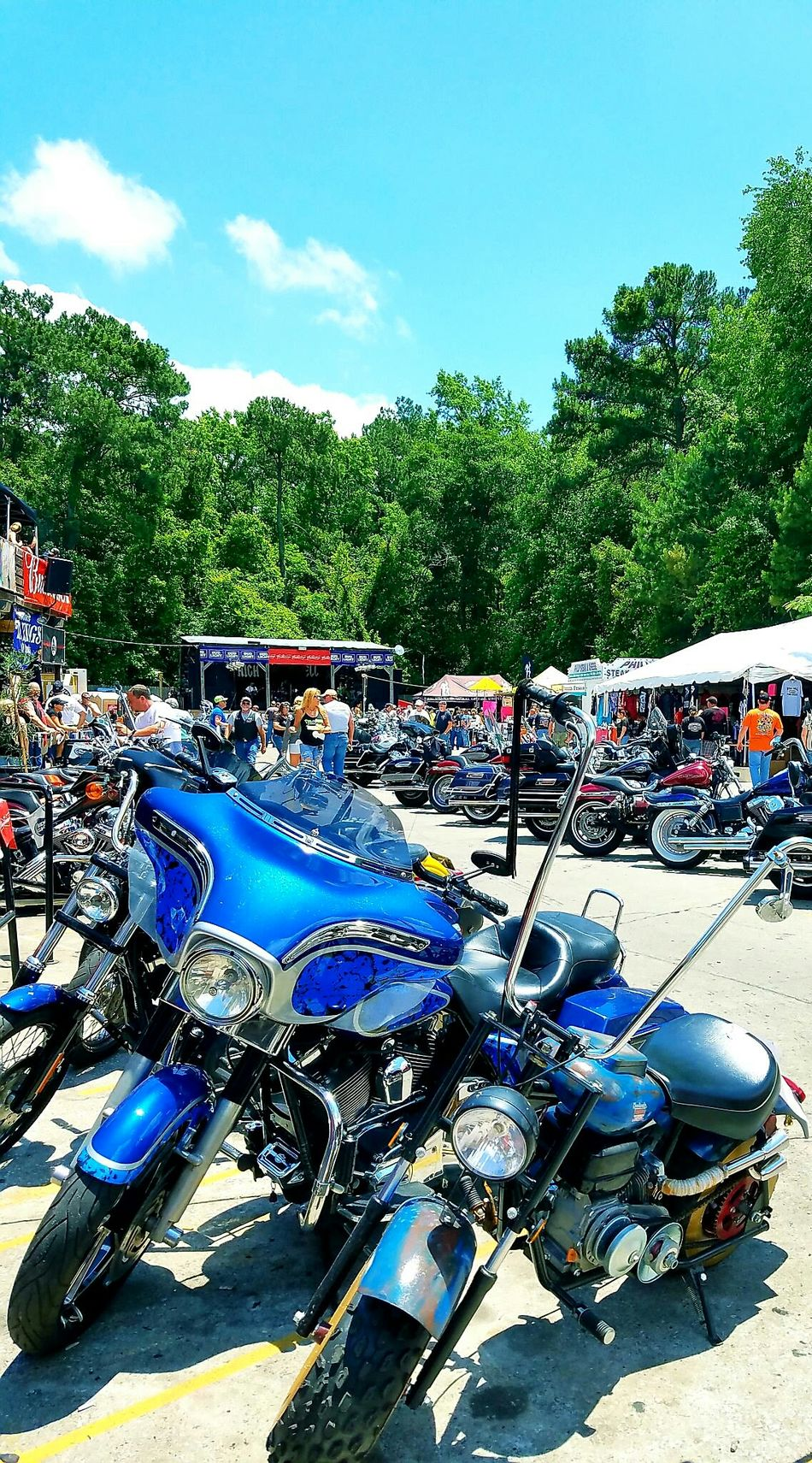 Tree Blue Celebration Outdoors Multi Colored Day Bikeweek2016 Bikeweek Harleydavidsongirl Harleygirl Harley4life Myrtlebeachsouthcarolins Transportation Mode Of Transport