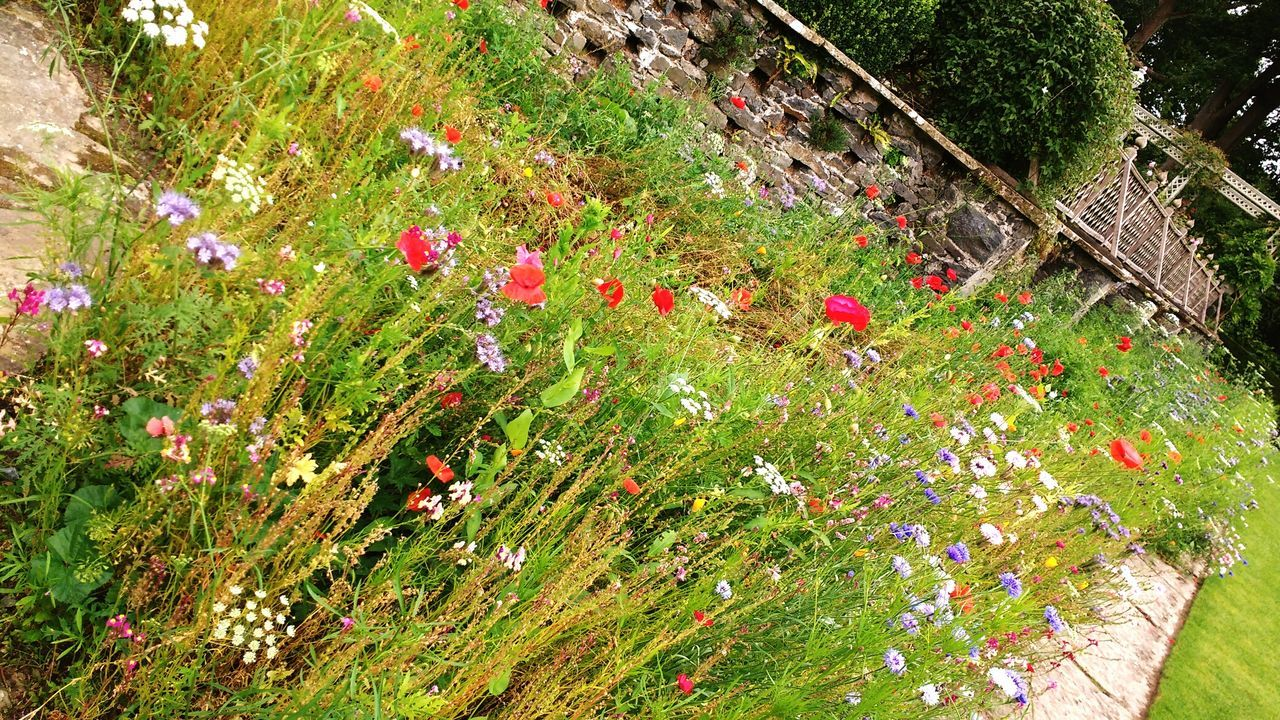 flower, nature, outdoors, plant, high angle view, day, beauty in nature, no people, growth, green color, grass