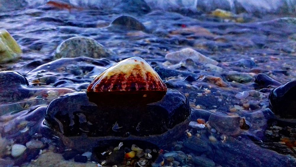 Norway Animal Themes Beauty In Nature Close-up Day Nature No People Outdoors Rock - Object Shell