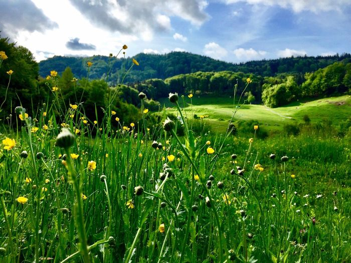 Nature Growth Landscape Scenics Green Color Tranquil Scene Agriculture Outdoors Green Sprring Colorful