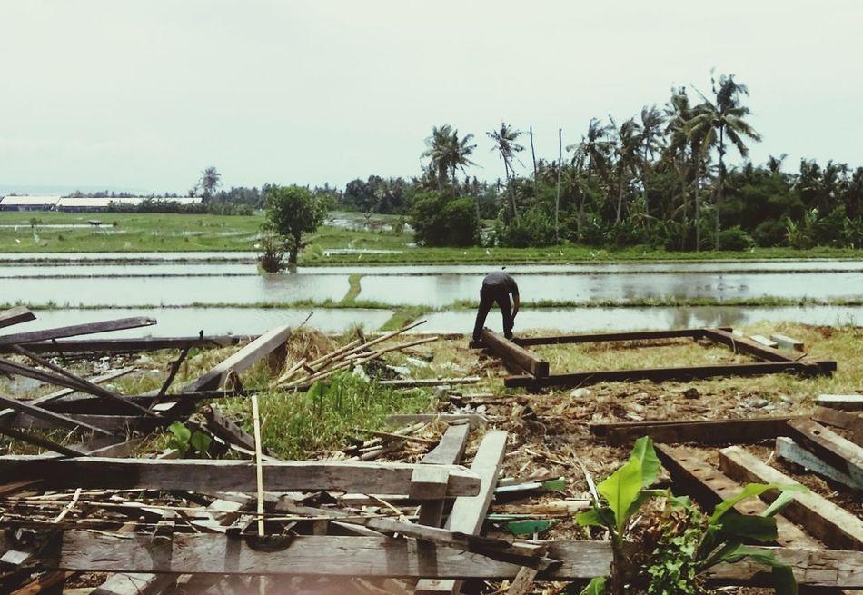 Indonesia_photography Bali, Indonesia Ubudgianyarbali WorkingHard Ricefields Harvest