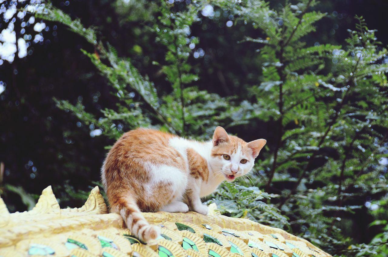 Cats Animal Themes Feline Cat Lovers Pets Cats Of EyeEm Cat♡ EyeEm Animal Lover Meow Alertness