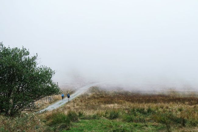 The beginning Tranquil Scene Tranquility Walking Grass Unrecognizable Person Tree Copy Space Plant Fog Full Length Scenics Field Nature Green Color Non-urban Scene Water Beauty In Nature Day Outdoors Foggy Landscape_photography EyeEm Best Shots Fresh 3 Open Edit Eye4photography