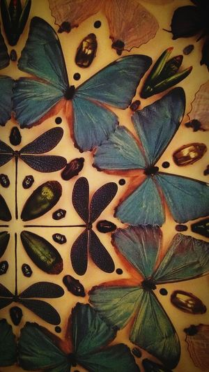 Butterfly Insects  Blue