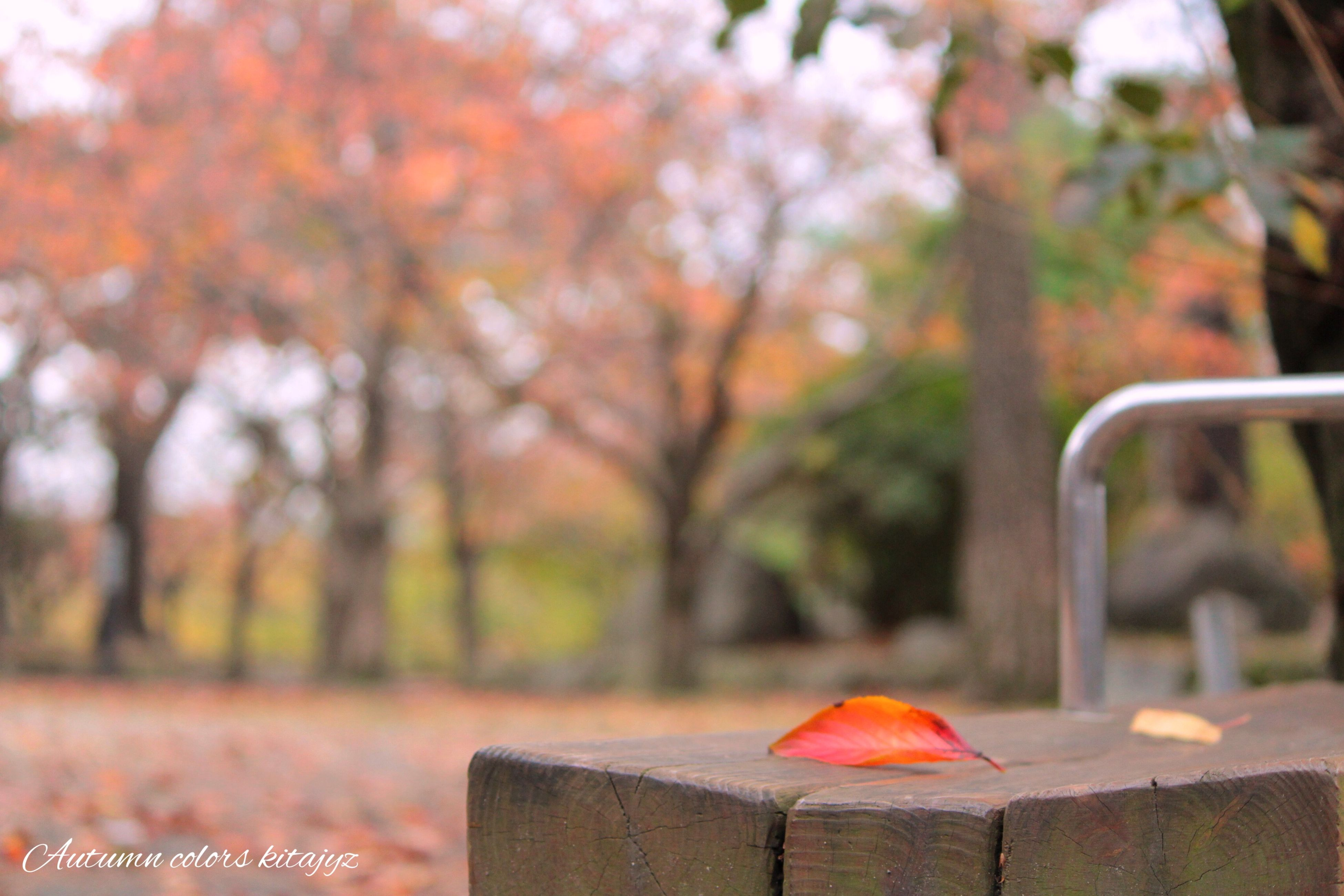 focus on foreground, tree, close-up, autumn, day, outdoors, nature, park - man made space, season, selective focus, no people, religion, red, leaf, change, front or back yard, bench, metal, growth, spirituality