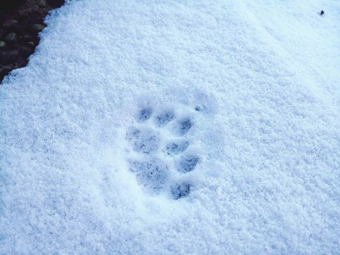 so cute! Paws Paws And Purrs Snow Pawprints Pawprintsinsnow Winter Cold Temperature Weather White Color Frozen Nature Close-up Frost Outdoors TooCold Cats Of EyeEm Catsofinstagram Berlin Sony Sony Xperia Smartphonephotography Sony Xperia Photography.
