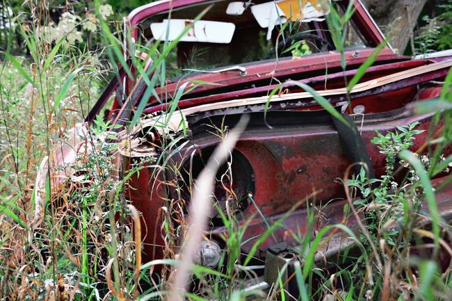 Obsolete Grass Field Rusty Run-down Abandoned Growth Deterioration Plant Close-up Car Selective Focus Damaged The Color Of Business Cars Pink Color Stationary Grassy Day Outdoors Nature Weathered