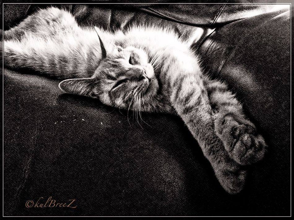 Sandy knows how to chill! SandySeries Streamzoofamily Cat Lovers