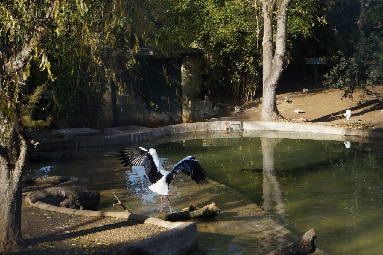 Animal Themes Animals In The Wild Bird Black Day Nature No People Outdoors Pond Reflection Spread Wings Tree Tree Trunck Vegetation Water Water Reflections White Color
