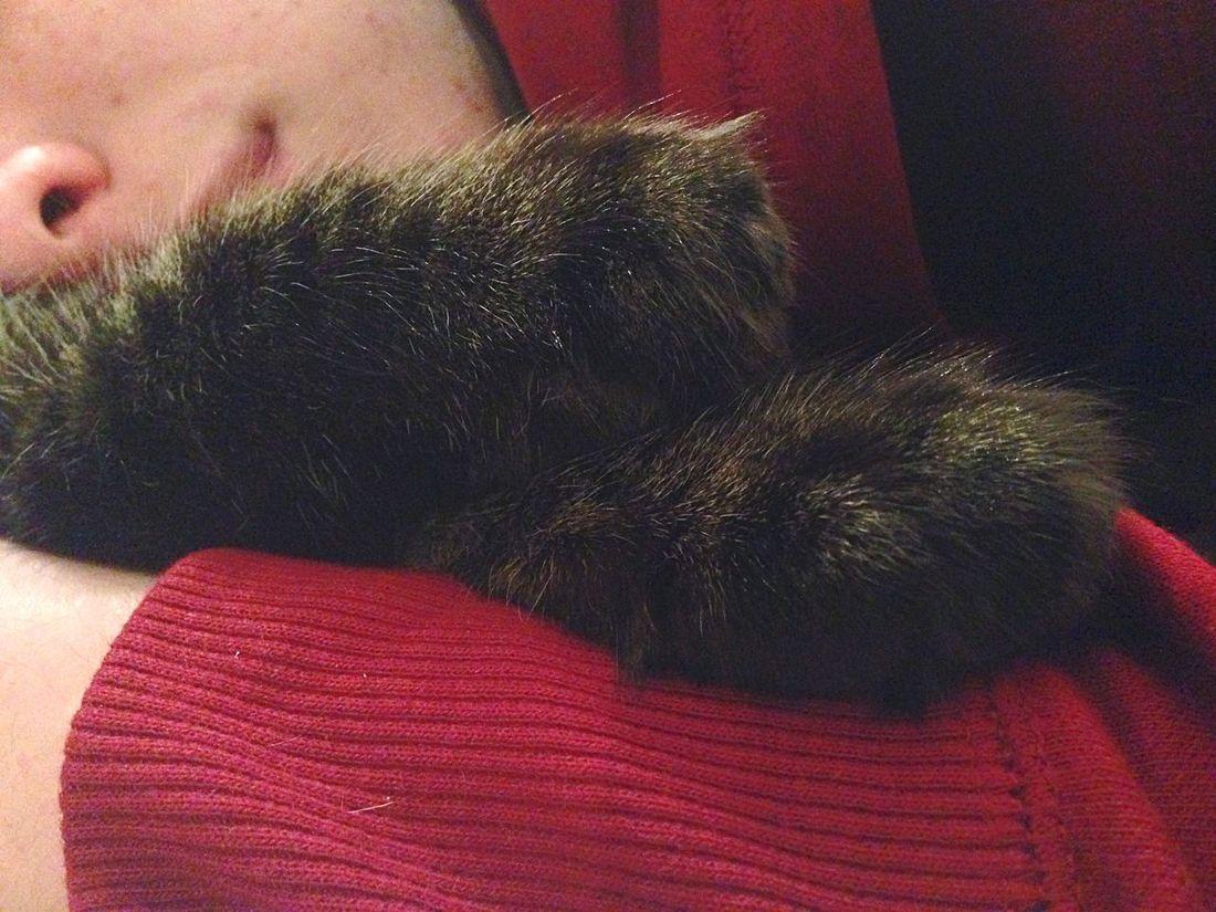 ? Kitten Love Bedtime Sleeping Brother Relaxing Loveanimals Patato