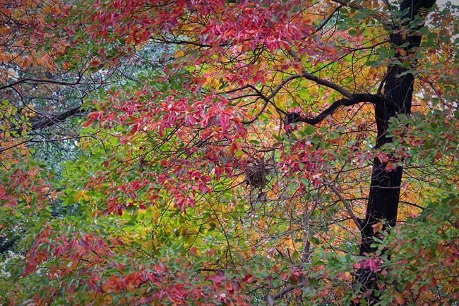 New York Central Park - NYC Central Park Outdoors Foliage Beauty In Nature Tree Autumn Nature Leaf Tree Color