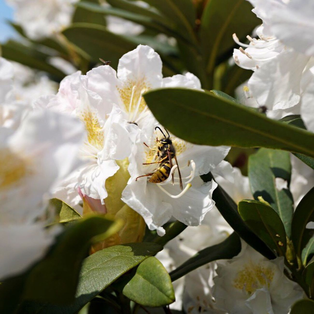 One Animal Insect Animal Themes White Color Animals In The Wild Flower Wildlife Bee Nature Petal Animal Wildlife Growth Day Leaf No People Plant Pollination Fragility Outdoors Beauty In Nature