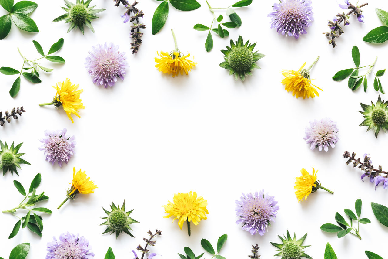 Purple and yellow meadow flowers frame on white background. Above Arrangement Backgrounds Close-up Clover Composition Directly Above Floral Floral Pattern Flower Flower Head Frame Freshness Green Color Leaves Meadow Pattern Purple Summer White Background White Color Yellow
