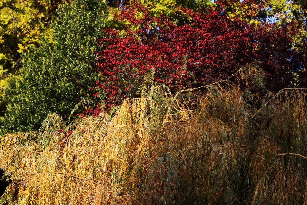 Autumn 2016 Beauty In Nature Close-up Day Fiè Allo Sciliar Grass Growth Italy Leaves Nature No People Outdoors Red Südtirol Tree Trees And Bushes