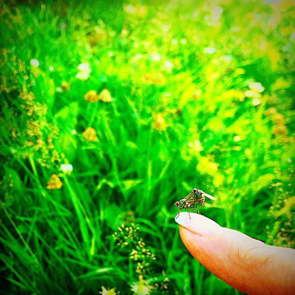 Animals In The Wild Wildlife Insect Focus On Foreground Grass Close-up Green Color Nature Person Day Green Outdoors Zoology Beauty In Nature Tranquility Animal Behavior Fragility Love Two Two Is Better Than One Nature Nature_collection Holding Human Finger Naturelovers