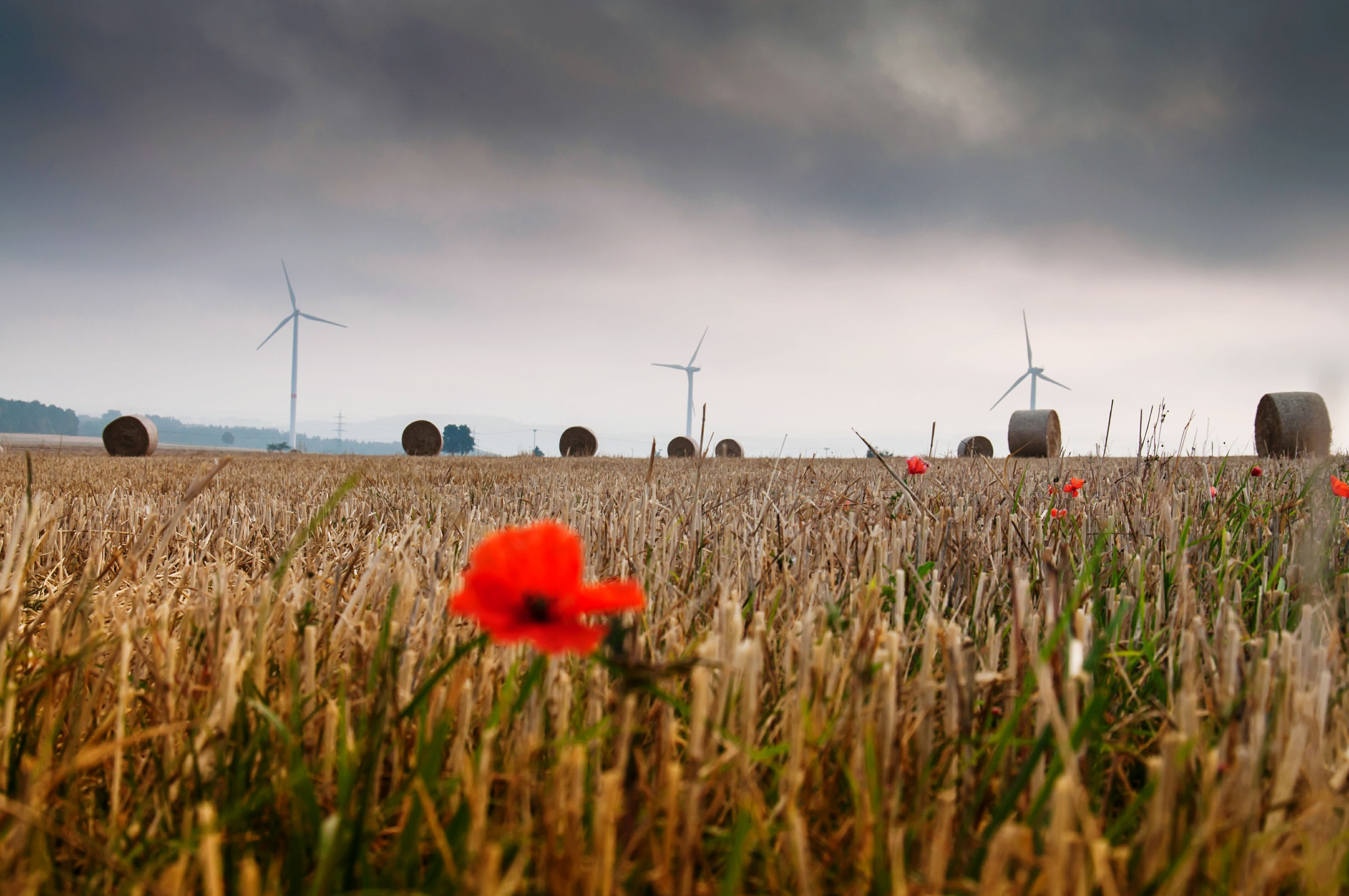 field, rural scene, agriculture, sky, landscape, flower, farm, growth, plant, poppy, crop, cloud - sky, nature, beauty in nature, wind power, windmill, freshness, cereal plant, cloud, tranquility