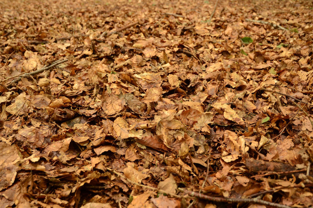 Autumn Brown Large Group Of Objects Leaf Carpet Leaves Natural Condition