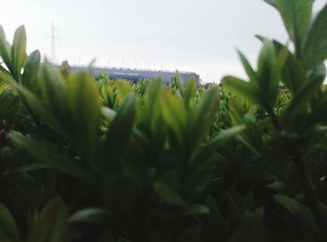 Growth No People Tree Nature Landscape Outdoors Plant Day Beauty In Nature Sky City Close-up