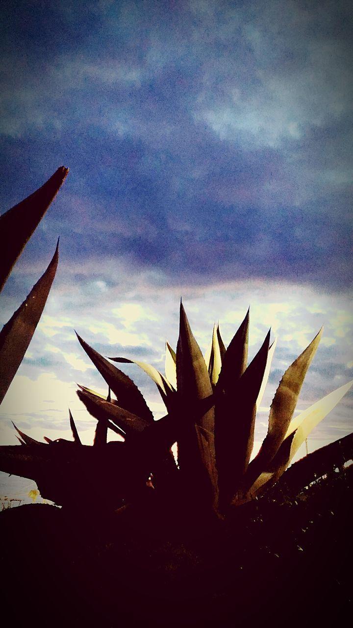 Piante Plant Vertical Growth Nature Cloud - Sky Beauty In Nature Cactus Aloe Coastline Sunlight Selective Focus Beauty In Nature Focus On Foreground Beachwalk Horizon Over Water