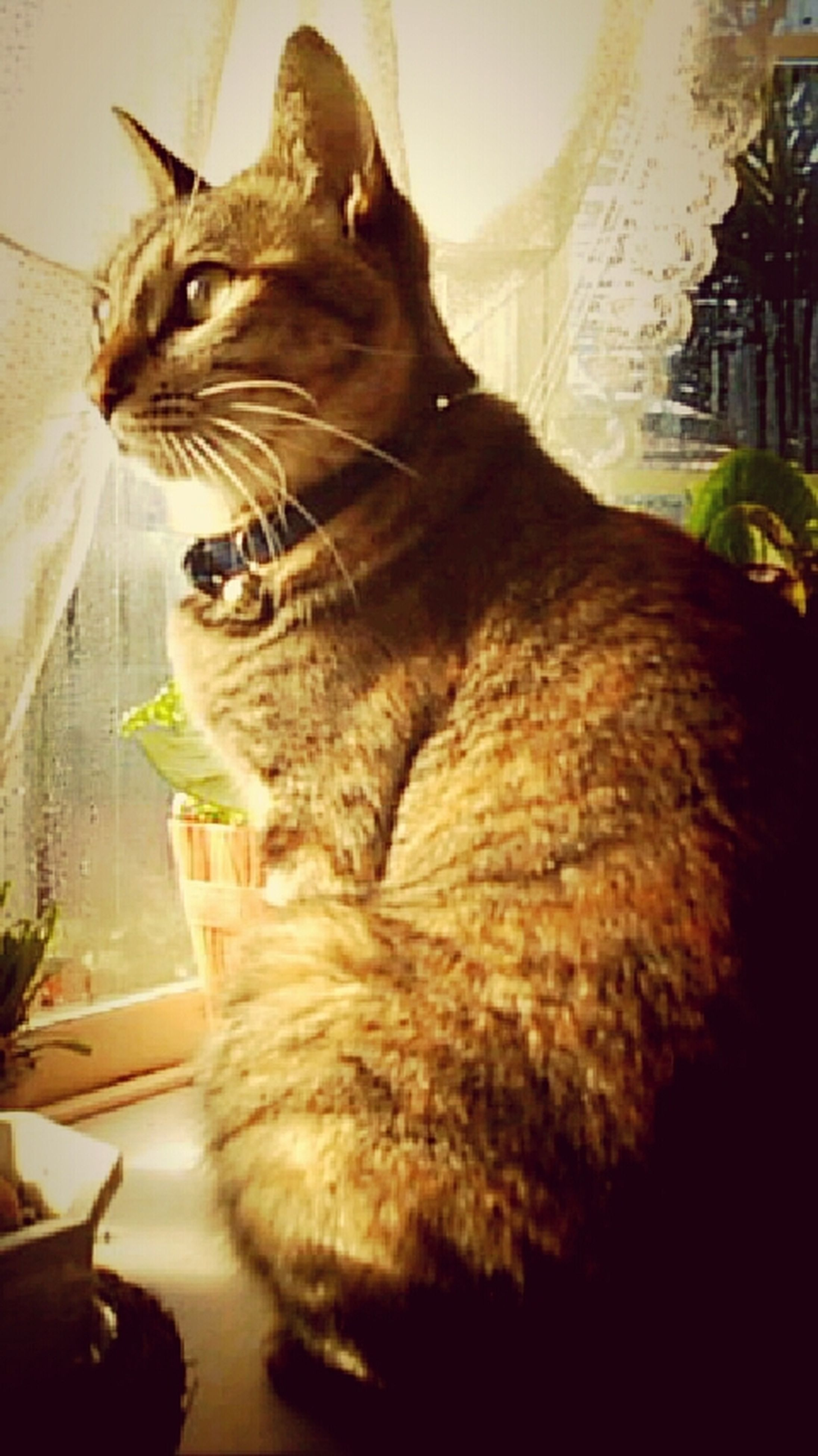 one animal, animal themes, pets, indoors, domestic animals, domestic cat, mammal, cat, feline, sitting, relaxation, home interior, whisker, looking away, table, home, close-up, full length, no people, window