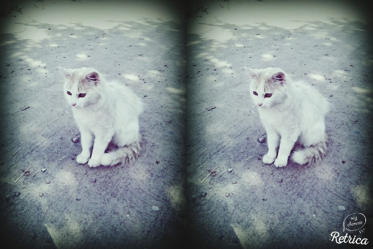 Animals Cat♡ My Cat Is Cooler Than Your Kids!