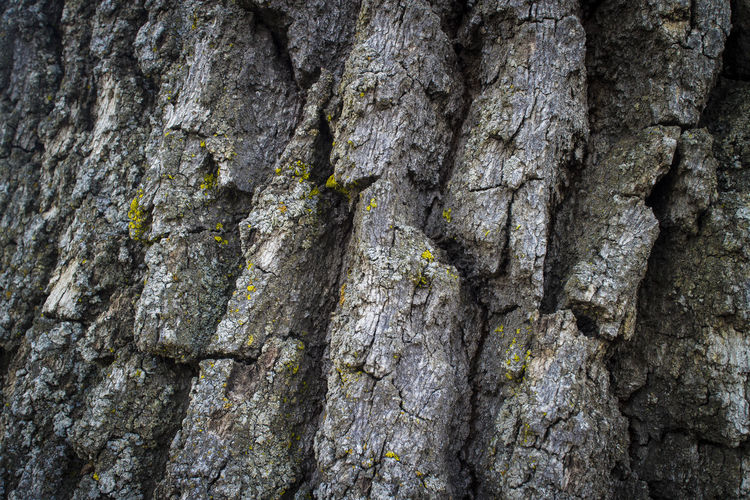 Oak Tree texture number 3. TehachapiCalifornia Southern California Outdoor Photography Texture Details