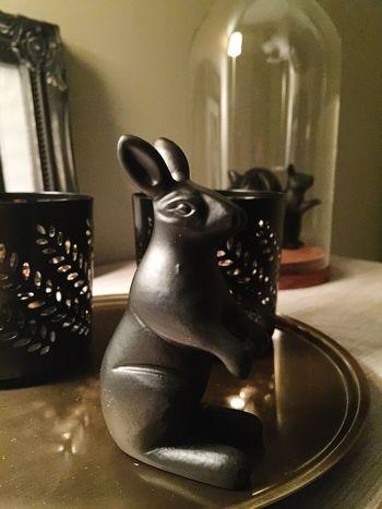 Mr. rabbit Indoors  Close-up Design Rabbit