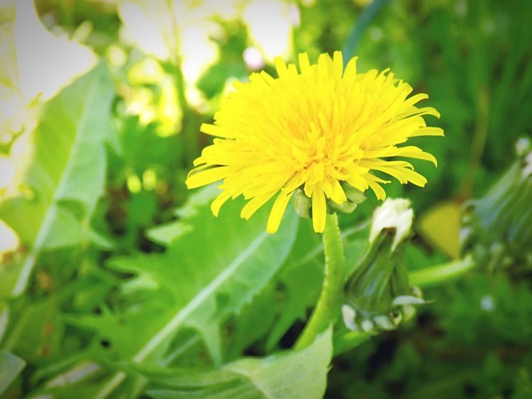 Sunlight Flower Yellow Nature Growth Beauty In Nature Plant Field Freshness Fragility Petal No People Flower Head Close-up Blooming Outdoors Day Edendessart 3XSPUnity