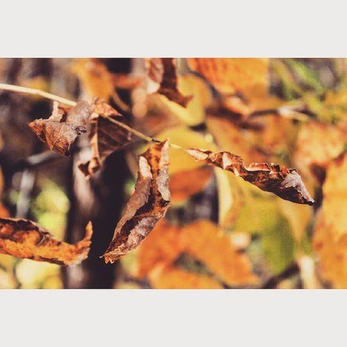 Сумасшедшей красоты осень 🔥 осенний_лес листья осень