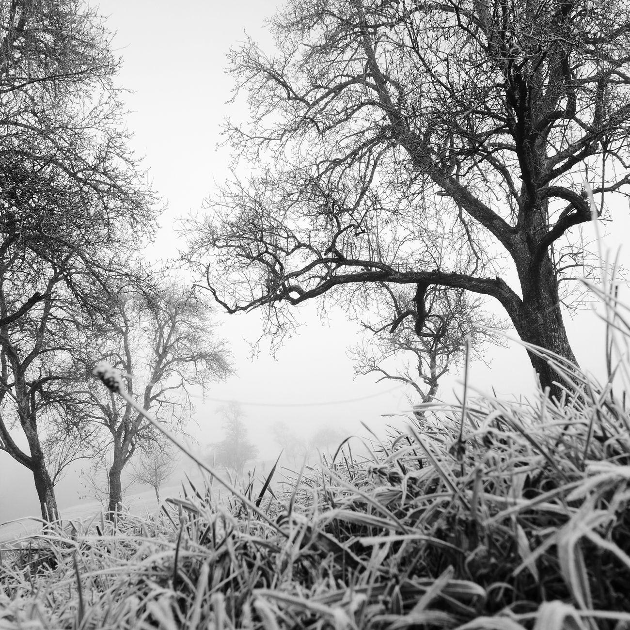 Trees December Frozen Nature Austria Blackandwhite Black & White It's Cold Outside