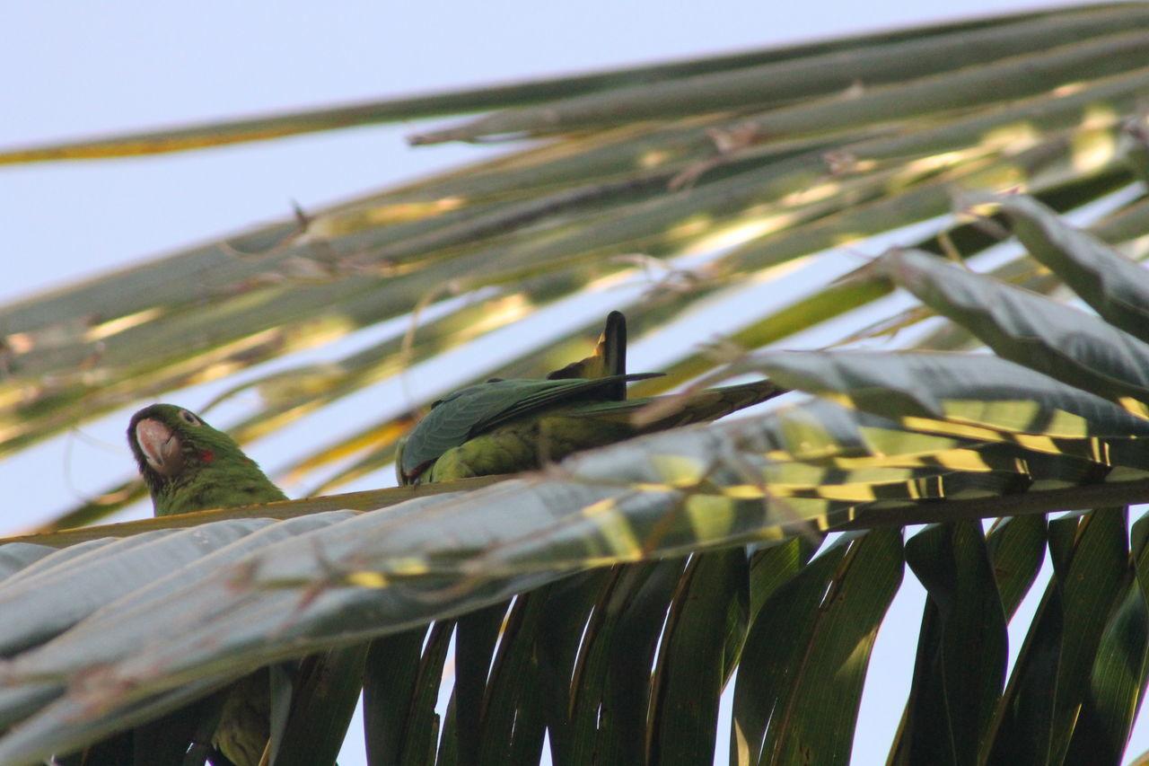 Maitaca Verde Animal Themes Bird Green Bird Maitai Maritaca Nature