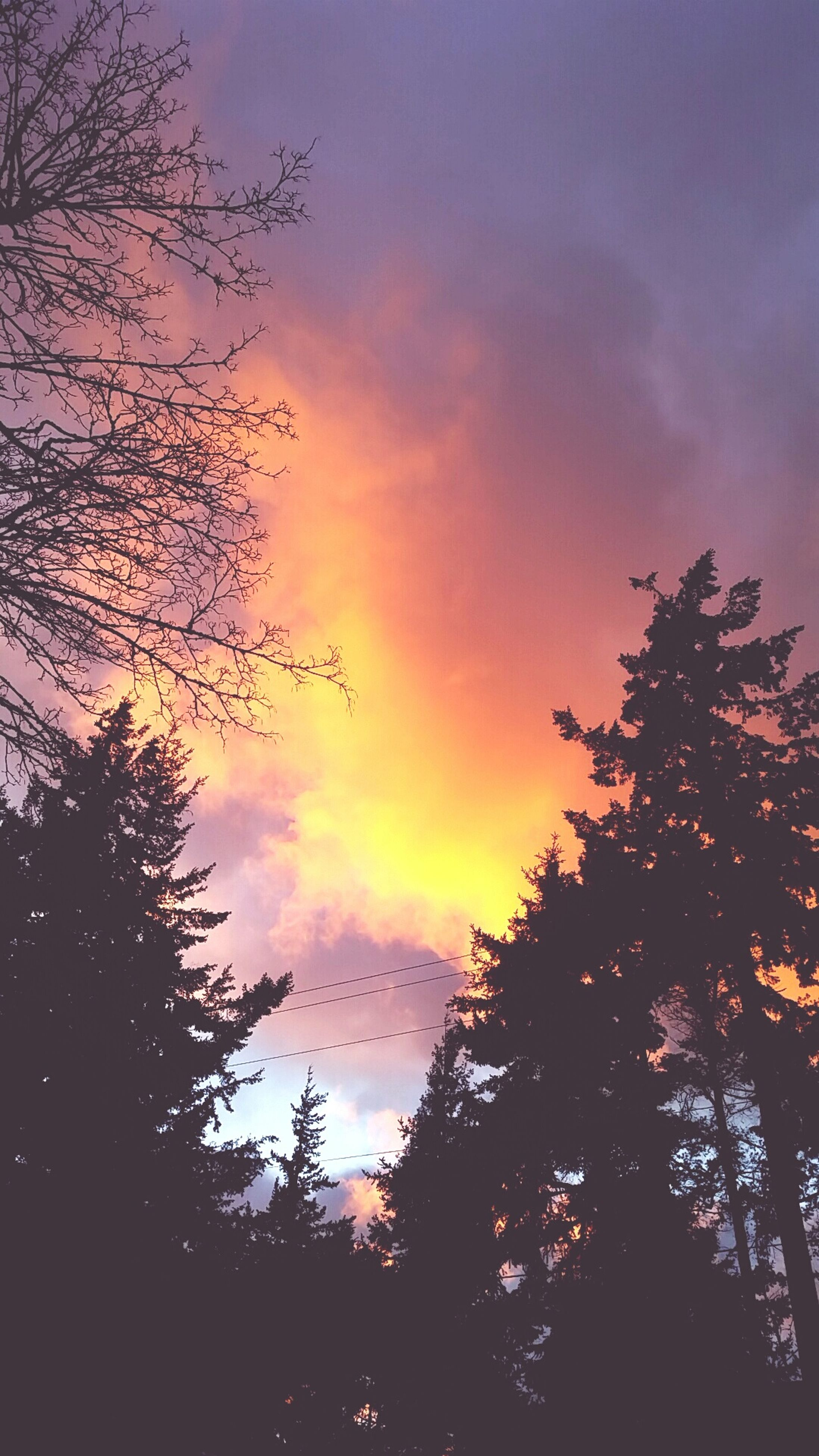 sunset, silhouette, sky, tree, beauty in nature, cloud - sky, scenics, tranquility, orange color, tranquil scene, nature, low angle view, idyllic, cloud, cloudy, dramatic sky, branch, dusk, growth, outdoors