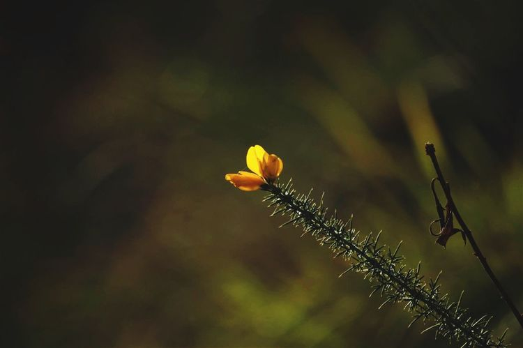 Nature Growth Plant Yellow Animals In The Wild Animal Themes Insect Beauty In Nature Close-up Leaf Fragility One Animal Outdoors No People Flower Freshness Flower Head Day