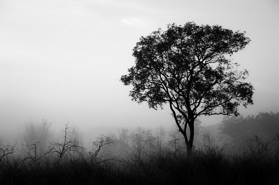 Dias Frios! Beauty In Nature Black And White Black And White Collection  Black And White Photography Bnw_captures Bnw_collection Bnw_life Bnw_worldwide First Eyeem Photo Fog Fog_collection Foggy Landscape Foggy Morning Foggy Weather Landscape Landscape_Collection Nature Natureza Neblina No People Streetphotography Tranquility Tree